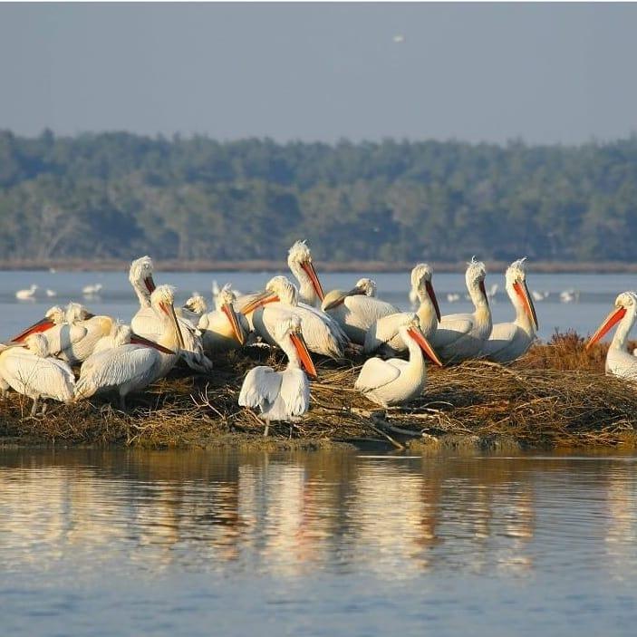 Udhëtim në lagunën e Karavastasë